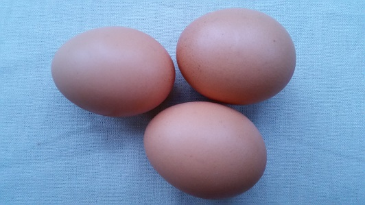Eggs are a source of complete protein